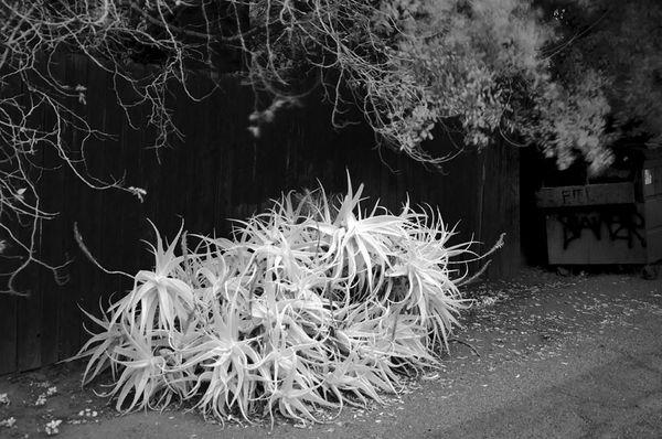 A bush against darker material....