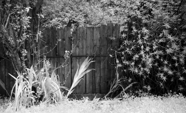 Field with plants against a dark fence....
