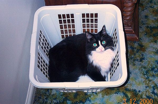 Is This MY Basket?...