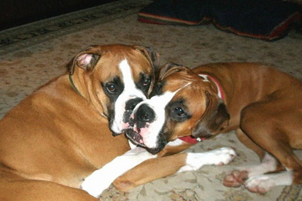 Here is one of my boxers...