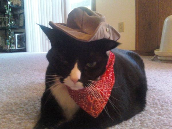 Daughters cat,Miles as Woody for holloween...