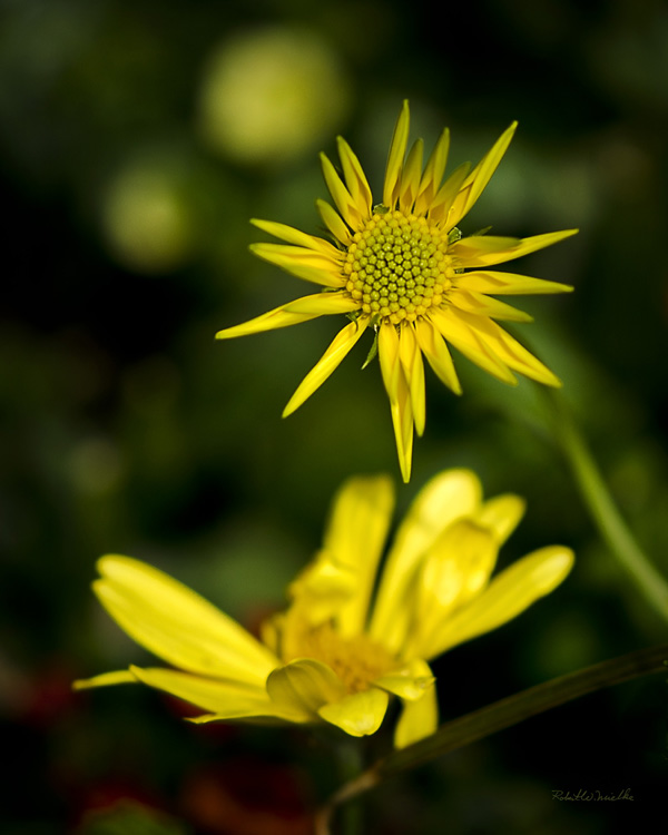 Yellow Flower Composition Example...
