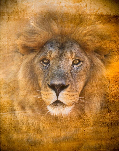 I am Lion your spirit guide......