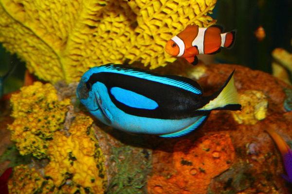 Dory and Nemo...