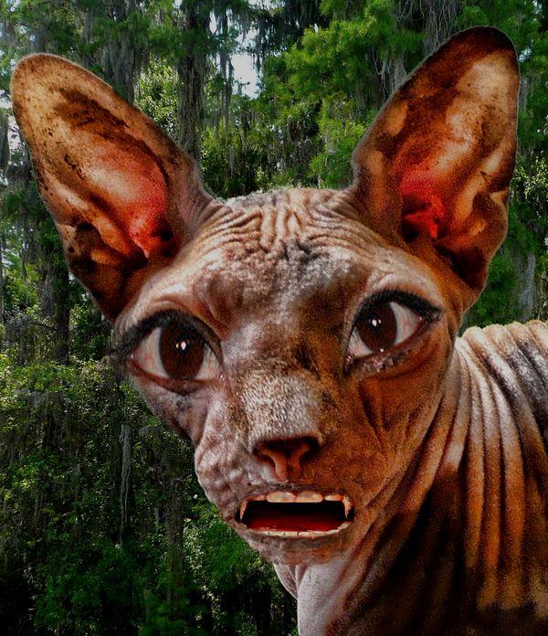 Chupacabra the Ultra Cat...