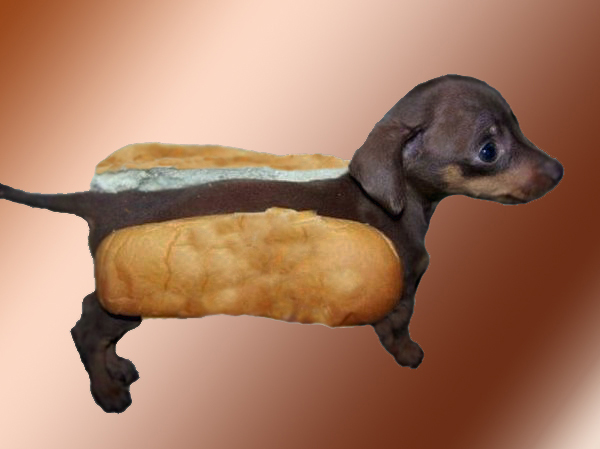 Back > Gallery For > Wiener Dog Puppy In Hotdog Bun