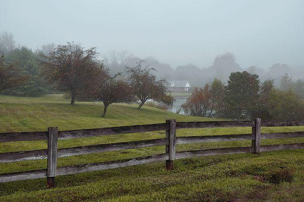 Front Yard Morning Mist...