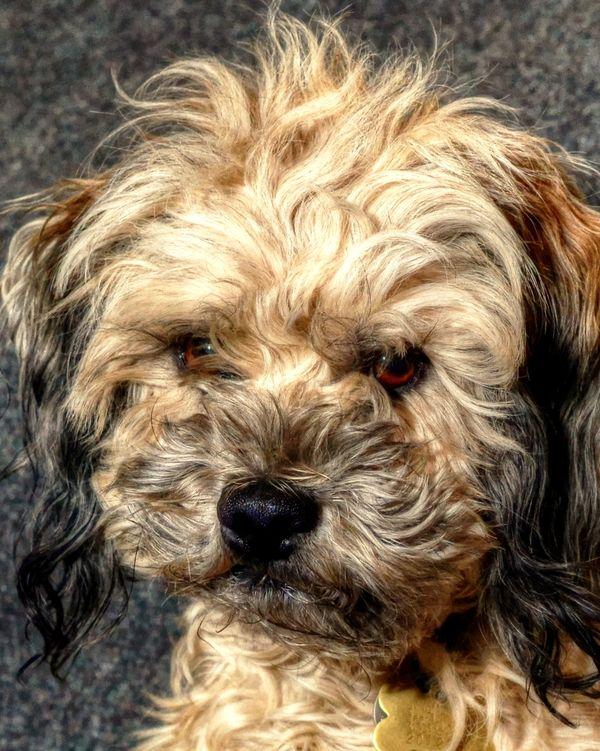 Good News Dogs Do Have Eyelashes