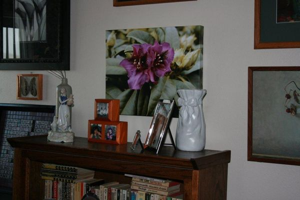 Rhododendron canvas...