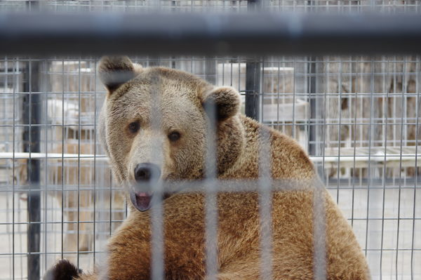 and Bears........