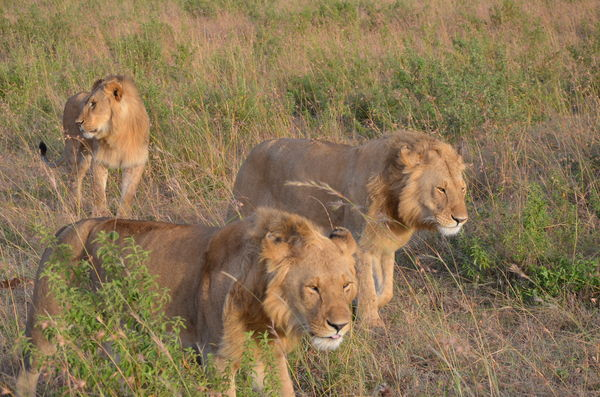 It is not so common to see 3 males together they m...