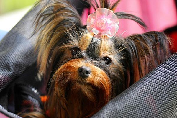 Pet Stroller Lightweight Folding Pet Stroller Dog Pink Dog