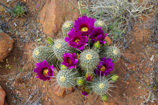 [عکس: thumb-1335453056228-my_little_cactus_flower.jpg]