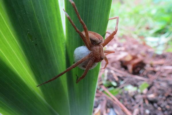 Spider pict #1...