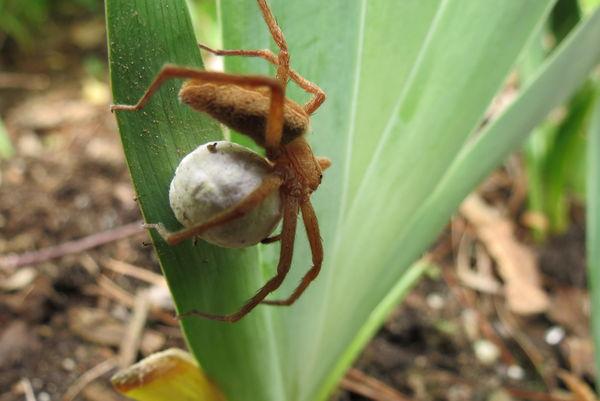 Spider pict #2...