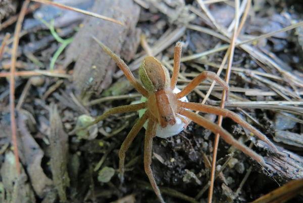 spider pict #3...