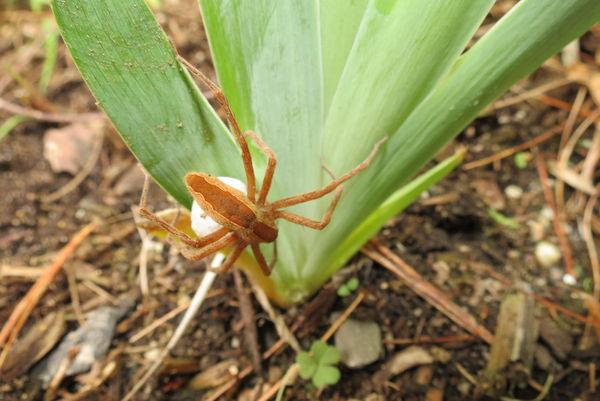 Spider #4...