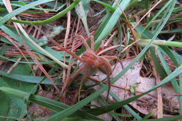 Spider #5...