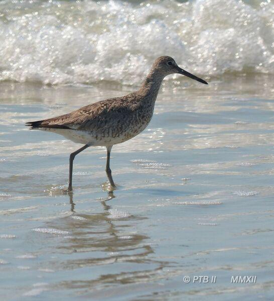 Bird Identification - need some help