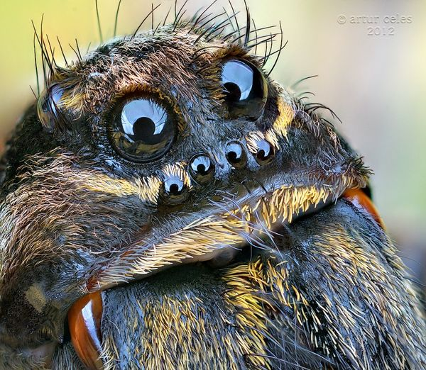 thumb 1357030086884 spider eyes1