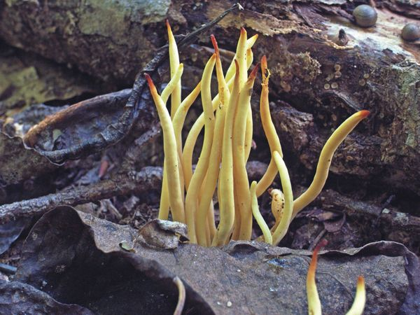 Fungi 1...