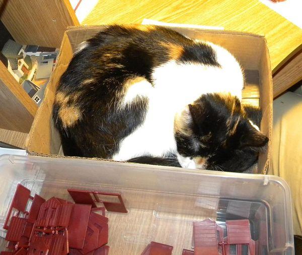 Cat in a box....