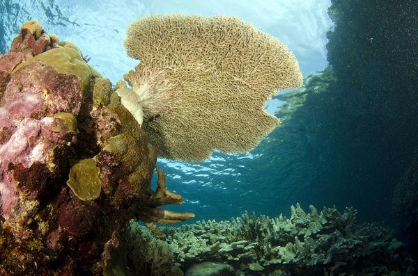 Hard corals beyong belief...