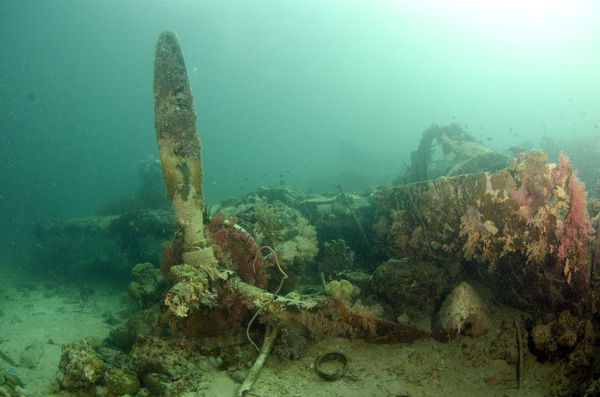 Japanese wreck at 100 ft...