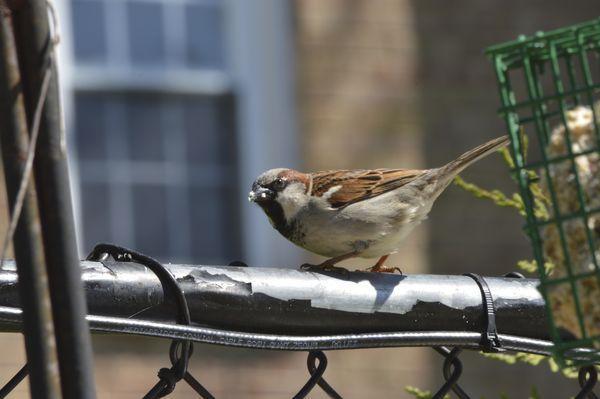 sparrow?...