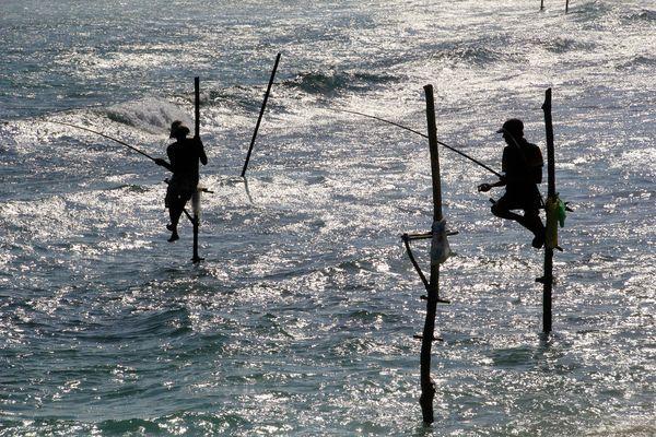 Stilt Fishermen...