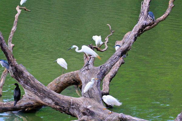 Cluster of birds...