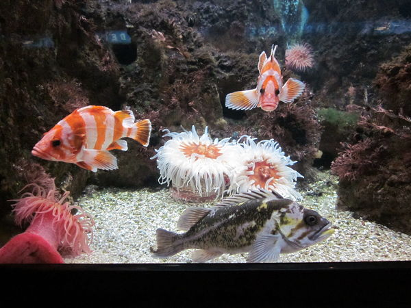 fish tank at the Shedd Aquarium...
