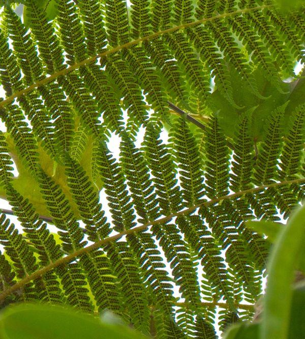 Under a fern...