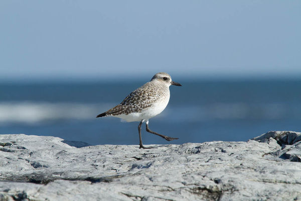 Here is the same bird from a different viewpoint. ...