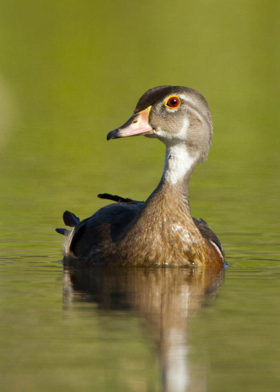 Here is the same Duck from a lower perspective. No...