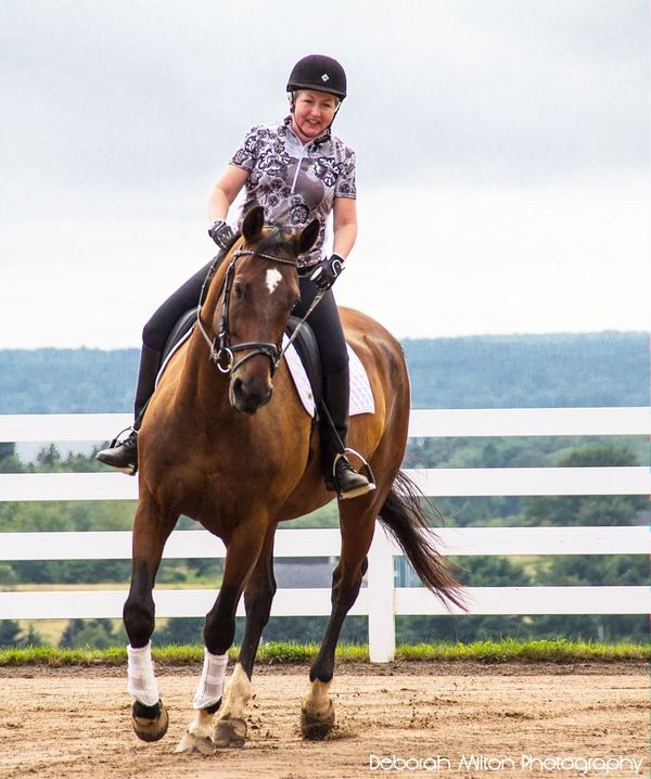 Horse & Rider Connection: The connection between h...