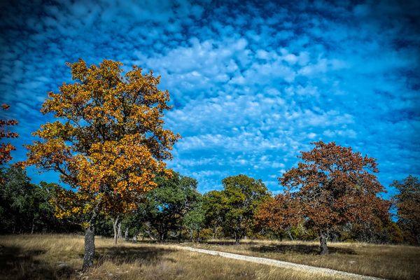 Fall Colors 1...