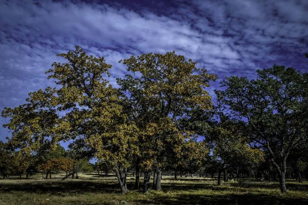 Fall Colors 2...