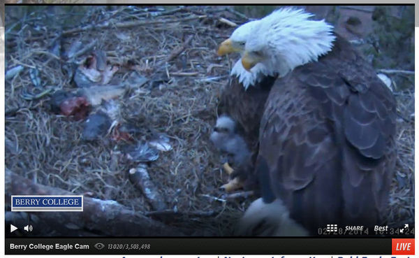 ... option and a warning... the eagle cam can be addictive. :shock
