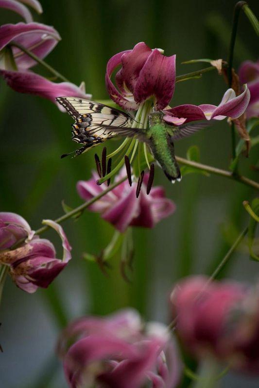 Damn hummingbird, it got in the way of my shot...
