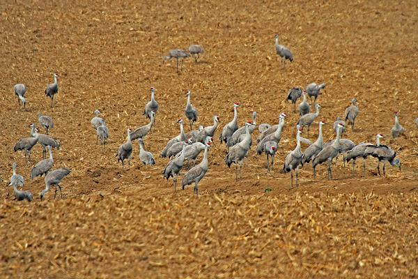 A field full!...