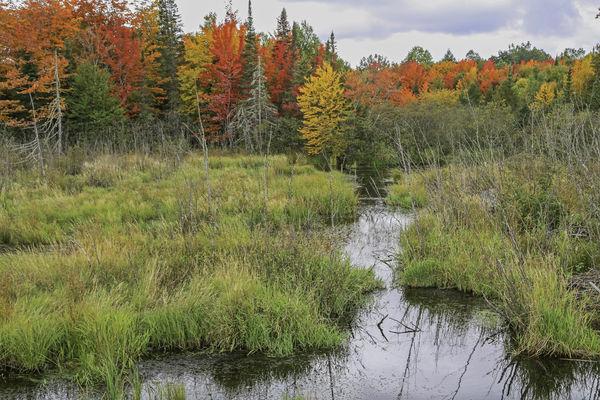 The marsh...