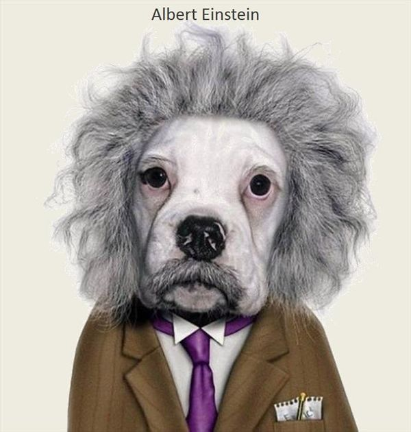 Dogs And Cats Who Look Like Famous People