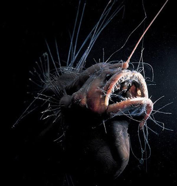 Weird deep sea creatures for Weird deep sea fish