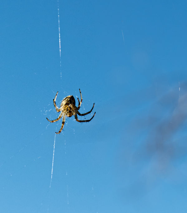 3. Hanging by a thread: teensy-tiny spider, about ...