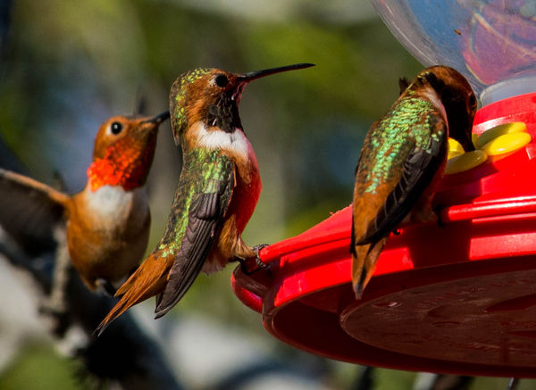 3 hummers...