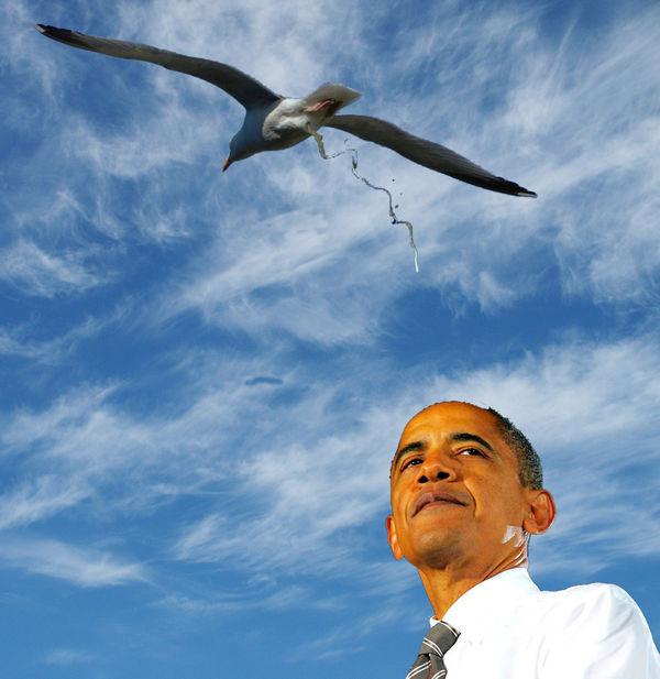 Birds That Were Quot Photoshopped Quot