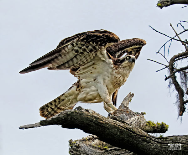 My osprey photo was published on june 3 2016 in the coeur for How to get my photographs published