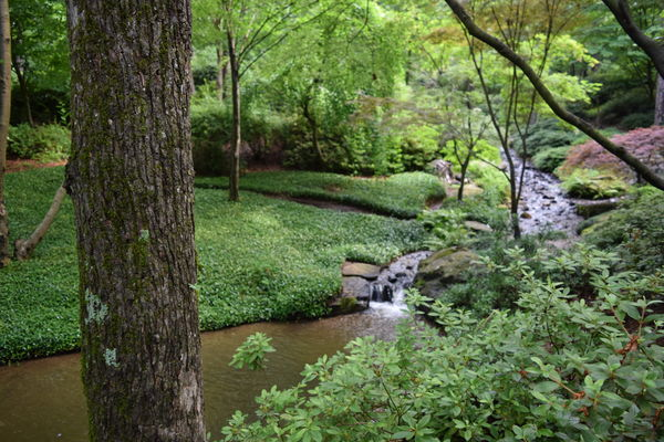Garvan Woodland Gardens In Hot Springs Ar