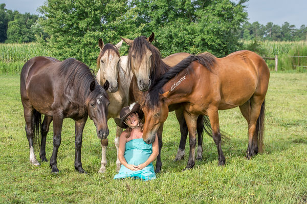 essays wild mustangs 8-8-2016 what essay horse mustang are some interesting facts about mustang horses wild horses and land creative writing is purely an emotional outlet true false.